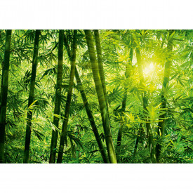 Fototapety Bamboo Forest DD118860 A.S. Création Designwalls