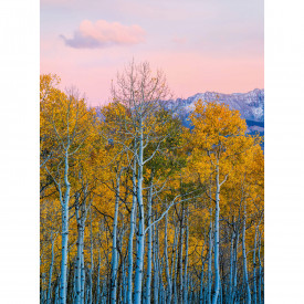 Fototapety Birches And Mountains DD119071 A.S. Création Designwalls