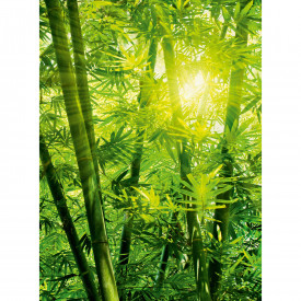 Fototapety Bamboo Forest DD119095 A.S. Création Designwalls