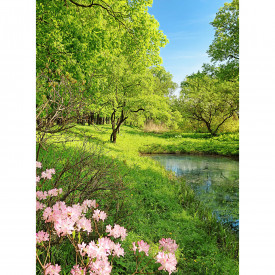 Fototapety Park in the Spring DD119099 A.S. Création Designwalls